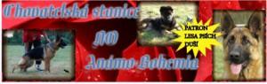 anamo-bohemia-banner.jpg